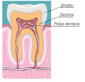 disegno-dente-con-didascalia-001